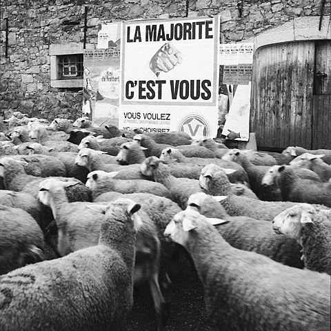 Le conformisme dans la société (3).